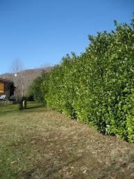 Preventivo giardino online pagina 4 preventivando.it