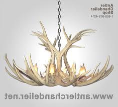 antler chandelier colorado our elk pool table real whitetail deer throughout antler chandelier colorado