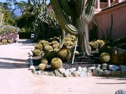 Small Picture Types Of Cactus For The Garden Using Cactus Landscaping