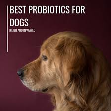 Best Probiotics for Dogs With Diarrhea and Allergies Rated (Top 6 ...