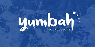 Image result for Yumbah