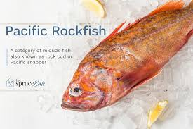 Rockfish Identification Chart What Is Pacific Rockfish And How Is It Used