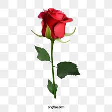 rose png images vector and psd files