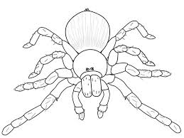 Spider Shape Template 55 Crafts Colouring Pages Free