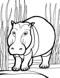 Hippo Coloring Pages Wild Animal Coloring Pages Hippopotamus