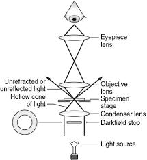 dark field microscopy darkfield microscope definition of darkfield microscope by medical
