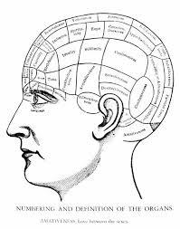 American Phrenological Chart C1870 10414138 Media