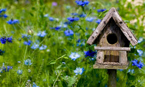 Birdhouse How To Build A Bird House Bird House Plans Wilderness