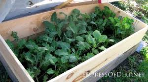 best garden vegetables. Broccoli And Kale In The Winter Garden During A Thaw | Grow Kale, Best Vegetables