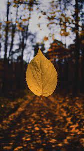 Iphone Xr Wallpaper Autumn