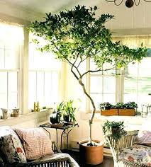 tree in living room do you miss your tree palm tree living
