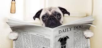 Durchfall und ungeformter Kot / Stuhlgang bei Hunden