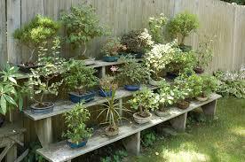 bonsai gardens. elandan gardens bonsai