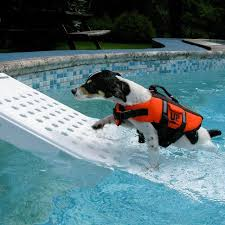 Image result for dog getting out of the pool