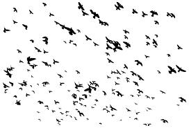 flock of birds clipart. Interesting Clipart Huge Flock Of Birds Flying Silhouette To Clipart