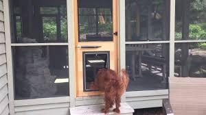 Dog Door Installed In Custom Built Cedar On Screen Porch  YouTube