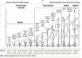 Wheat Growth Chart Growth Stages Chart