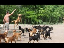 lots of dogs together. Modren Lots WATCH 450 DOGS RUN U0026 PLAY TOGETHER With Lots Of Dogs Together