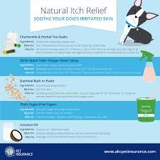 5 Natural Remedies to Help Your Itchy Dog