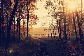 Image Pexels Unsplash Nature Backgrounds 17 Best Free Background Leafe Fall