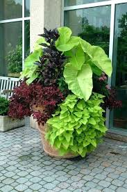 low maintenance outdoor potted plants large scale container for