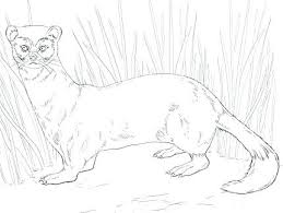Ferret Coloring Pages Lovely Coloring Pages That Are Printable For