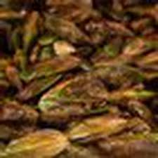 <b>NZ's green lipped</b> mussels again hailed as 'super food' - NZ Herald