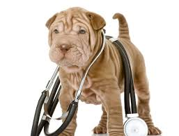 How To Check Your Dogs Vital Signs Rover Blog