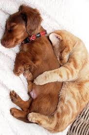 puppy and kitten cuddling. Perfect Kitten Happy National Love Your Pet Day Here Are 9 Photos Of Cats And Dogs Who  Celebrating Properly Throughout Puppy And Kitten Cuddling