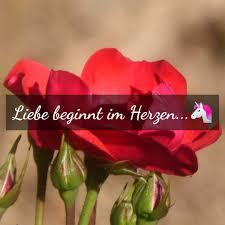 Stillezeilen Liebe Beginnt Im Herzen Q Siehst Du