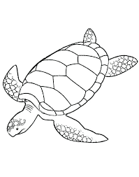 Easy Sea Turtle Drawing 488websitedesigncom