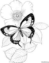 Butterfly With Flowers Coloring Pages Butterfly And Flower