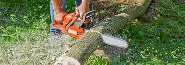 if you are looking for experience arborists for all of your tree service needs then wallace tree service is the right choice we are licensed insured and