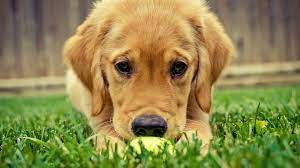 Cute Dog, HD Animals, 4k Wallpapers ...