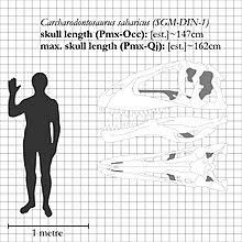 carcharodontosaurus size carcharodontosaurus wikipedia