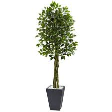 nearly natural grey foot ficus tree indoor or outdoor planter for braided stem bright green ficus indoor tree losing leaves
