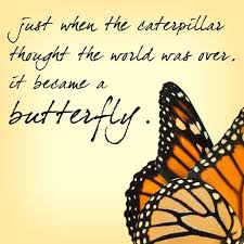 Butterfly Quotes Magnificent Butterfly Quote 48 Morning Inspiration Pinterest Butterfly