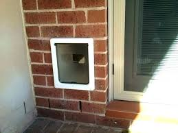 installing doggie door through the wall dog door through wall dog door backyards pet installation featuring