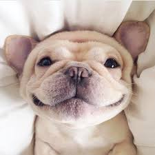 Image result for smiling pets