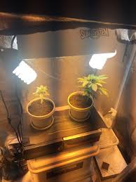 Not Enough Light For Plants My 1st Grow 420 Magazine