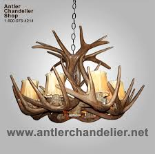 reion white tail antler chandelier crs 1