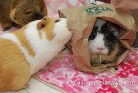 guinea pig toy ideas paper bag