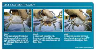 Md Crab Size Chart Maryland Blue Crab Regulations