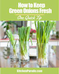 how to keep green onions fresh for weeks