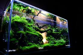 Cool Aquariums For Sale Glass Aquariums For Sale The Amazing Aquarium Design Indoor