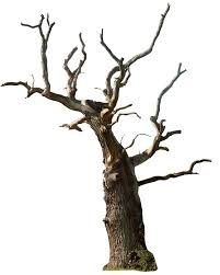 gd08 1,466 674 Dead tree 02 png by gd08