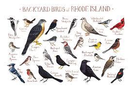 Amazon Com Backyard Birds Of Rhode Island Field Guide Art