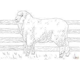 Lamb Coloring Page Free Printable Pages Ribsvigyapan Com Lamb