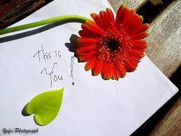 Love Flower Quotes love cute flower quotes photograph image 100 on Favim 84