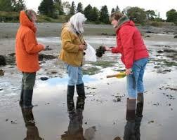 Intertidal Shore Walk Tour Of Campobello And Lubec Tours